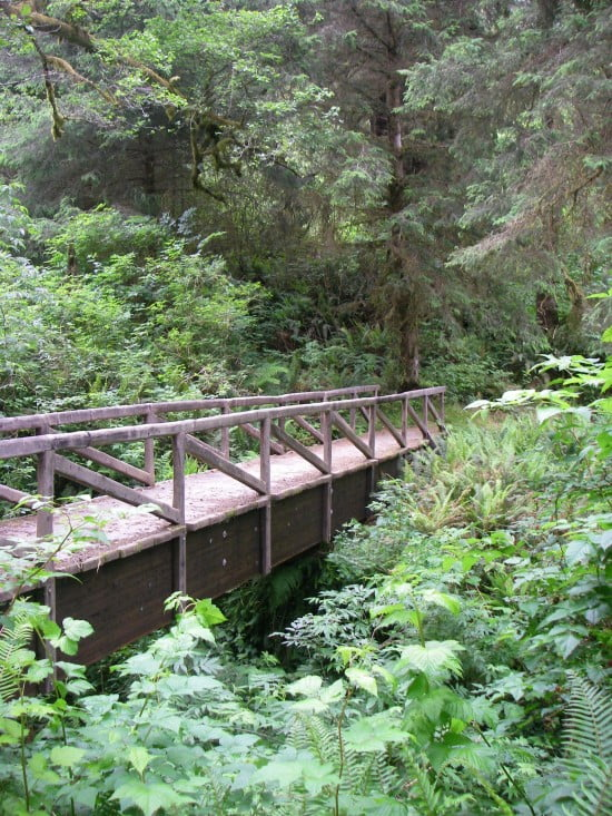 Ossagon Trail, Prairie Creek Redwoods