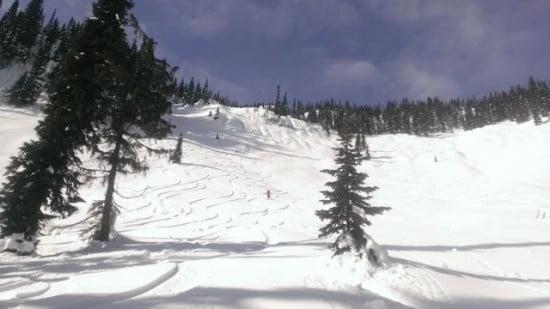 Tracks in the virgin snow