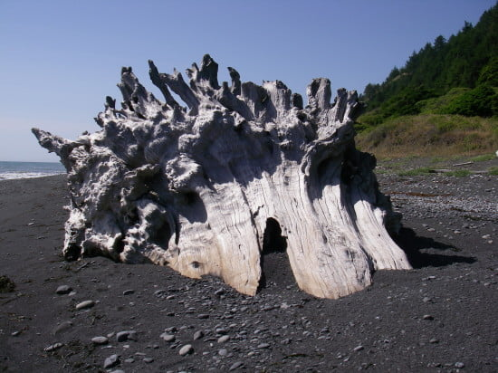 Giant skeletons of trees collected on the beaches especially where the creeks went into the seae