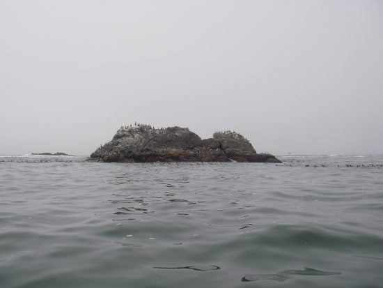 Hundreds of small black and white sea birds surrounded this rock. Cormorants as well.