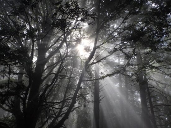 Eric and Misha's sacred tree, Higgins-Purissima trail near Half Moon Bay, CA