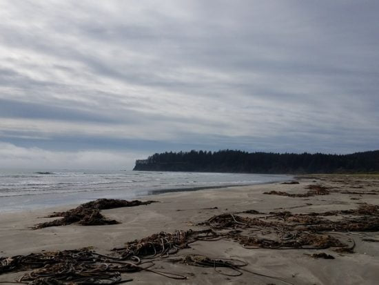Hobuck Beach and Cape Flattery in the distance, where you can see some of the last remaining old growth forest